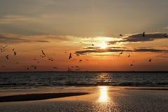 Rosja, Seagull, ptak, chmury, sunbeam, półmrok, zmierzch, odbicie, pluskocze Obrazy Stock