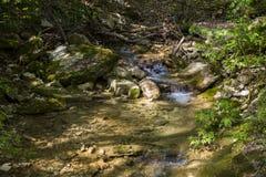 Rosja, Sochi Jesieni Lasowa Halna rzeka Zdjęcie Stock