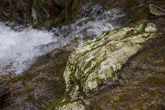 Rosja, Sochi Jesieni Lasowa Halna rzeka Fotografia Royalty Free