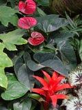 Rosja Spacer wokoło Moskwa ogród botaniczny obrazy stock