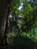 Rosja Spacer wokoło Sochi ogród botaniczny Zdjęcie Royalty Free