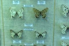 Rosja, St Petersburg, 11,05,2015 motyle wewnątrz wystawa Zdjęcia Stock