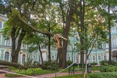 Rosja, St Petersburg, Wrzesień 27, 2018 - podwórze muzeum pukający puszek, duży drzewo eremu wiatr łamał zdjęcia royalty free