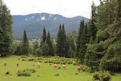 Rosjanina Syberia góra Altai Obraz Royalty Free