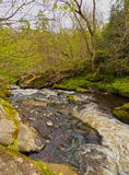 Roslin Glen. UK, Scotland, Midothian, Edinburgh Area, Landscape of Roslin Glen and the River North Esk royalty free stock image