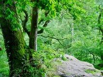 Roslyn Glen, Schottland stockfotos