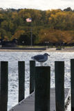Roslyn Harbor New York Stock Images