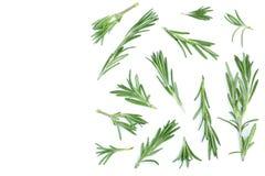 Rosmarini verdi freschi isolati su un fondo bianco con lo spazio della copia per il vostro testo Vista superiore Disposizione pia Fotografie Stock Libere da Diritti