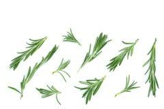Rosmarini verdi freschi isolati su un fondo bianco con lo spazio della copia per il vostro testo Vista superiore Disposizione pia Fotografia Stock