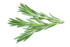 Rosmarini verdi freschi isolati su un fondo bianco Vista superiore Disposizione piana Fotografia Stock Libera da Diritti
