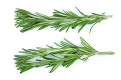 Rosmarini verdi freschi isolati su un fondo bianco Vista superiore Disposizione piana Immagini Stock Libere da Diritti
