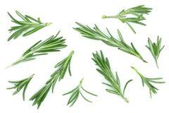 Rosmarini verdi freschi isolati su un fondo bianco Vista superiore Disposizione piana Fotografie Stock Libere da Diritti
