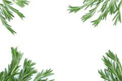 Rosmarini verdi freschi su un fondo bianco con lo spazio della copia per il vostro testo Vista superiore Disposizione piana Immagini Stock Libere da Diritti