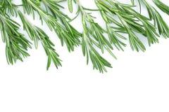 Rosmarini verdi freschi su un fondo bianco con lo spazio della copia per il vostro testo Vista superiore Disposizione piana Immagine Stock Libera da Diritti