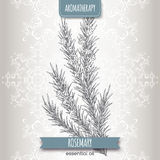 Rosmarinus officinalis aka rosemary sketch. On elegant lace background. Aromatherapy series. Great for traditional medicine, perfume design, cooking or Stock Photography