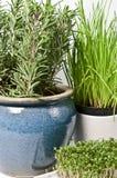 rosmary watercress för gräslök Royaltyfria Foton