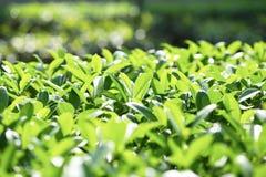 Rosnąć liście fotografia stock