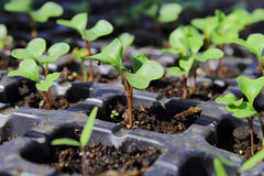 Rosnąć rośliny Obraz Stock