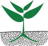 Rosnąć rośliny w ziemi Obrazy Royalty Free