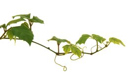 rosnące rośliny Obrazy Royalty Free