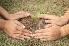 rosnące rośliny Obraz Royalty Free