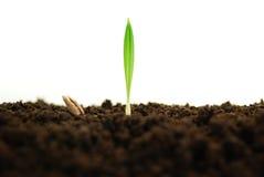 rosnące rośliny Zdjęcia Stock