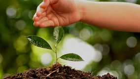 rosnąca sadzonka zbiory