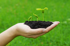 Rosnąć drzewa Obraz Stock