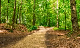Rosochate drogi w zielonym lesie obrazy royalty free