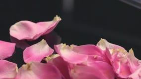Rosor av rosa färg på en mörk bakgrund lukten av friskhet av överraskningen för doftbukettgåva arkivfilmer