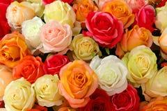Rosor bakgrunder, förälskelse Royaltyfria Bilder
