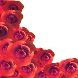 Rosor Copyspace föreställer Flora Romance And Flower Arkivfoto
