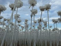 10.000 rosor Cordova Cebu Royaltyfri Foto