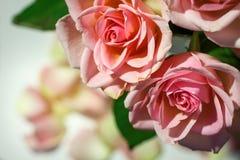 Rosor för det gretting kortet Royaltyfria Bilder