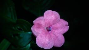 Rosor för dig! Royaltyfri Foto