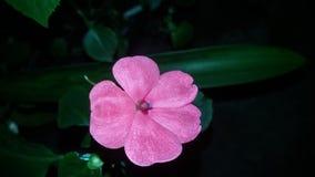 Rosor för dig! Royaltyfri Fotografi