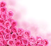 Rosor för varma rosa färger. Gräns Royaltyfri Fotografi