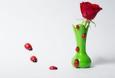 Rosor i en grön vas med skalbaggar royaltyfri bild