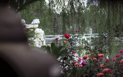Rosor i kinesiska trädgårdar arkivfoton