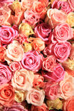 Rosor i olika skuggor av rosa färger som gifta sig ordning Royaltyfria Foton