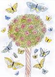 Rosor och fjärilar. Fotografering för Bildbyråer
