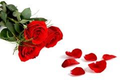 Rosor och kronblad Royaltyfria Foton