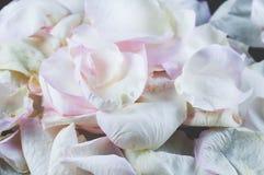 Rosor och kronbladblommor p? olika bakgrunder arkivfoto