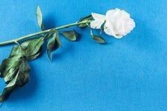 Rosor och kronbladblommor p? olika bakgrunder fotografering för bildbyråer