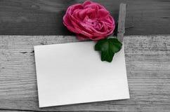 Rosor och tomt papper royaltyfri fotografi