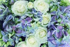 Rosor och vanlig hortensia Arkivbilder