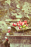 Rosor på den gamla gravvalvet fotografering för bildbyråer