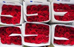 Rosor packade klart för export på kolonin för plantageLaCompania rosor nära Cayambe i Ecuador royaltyfria bilder