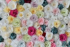 Rosor skyler över brister väggbakgrund med att förbluffa röda och vita rosor arkivbild