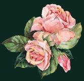 Rosor vattenfärg Royaltyfria Foton